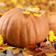 Pumpkins and autumn leaves, on yellow background - Foto de Stock
