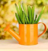 Cactus em regador no fundo brilhante — Foto Stock