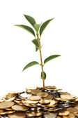 Plant growing out of gold and silver coins on white background close-up — Stock Photo