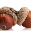 Stock Photo: Brown acorns, isolated on white