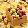 Crate of fresh ripe apples in garden on autumn leaves — Stock Photo #18426689