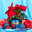 Beautiful poinsettia with christmas balls and presents on blue fabric background — Stock Photo