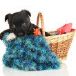 Cute puppy in basket isolated on white — Stock Photo #18428145
