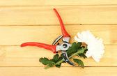 Gartenschere mit blume, isoliert auf weiss — Stockfoto