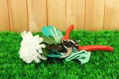 Gartenschere mit blume auf gras auf zaun-hintergrund — Stockfoto