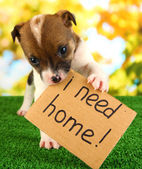 Abandoned little puppy seeking home on green grass on natural backgraund — Stock Photo
