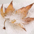 Fallen leaf on snow — Stock Photo #18572941