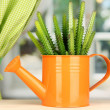 Cactus in watering con windowsill — Stock Photo #18574061