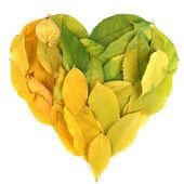 Zařivý podzim listy lež v tvaru srdce izolovaných na bílém — Stock fotografie
