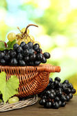 Assortment of ripe sweet grapes in basket, on green background — Stock Photo