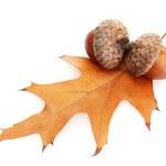 Brown acorns on autumn leaf, isolated on white — Stock Photo
