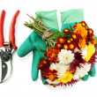 Secateurs with flowers isolated on white — Stock Photo