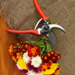 Secateurs with flowers on sackcloth on wooden background — Stockfoto