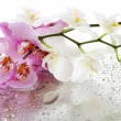 Pink and white beautiful orchids with drops — Stock Photo #18596353