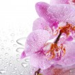 Pink beautiful orchids with drops — Stock Photo #18596583