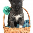 Cute puppy in basket isolated on white — Stock Photo