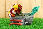 Sécateurs à fleurs dans le panier sur fond de clôture — Photo