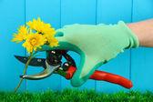 секаторы с цветком на фоне забора — Стоковое фото