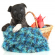 Royalty-Free Stock Photo: Cute puppy in basket isolated on white