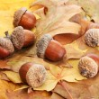 Brown acorns on autumn leaves, close up — Stock Photo #18658629