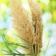 Reeds on green background - Stock Photo