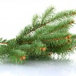 Fir tree branch, isolated on white — Stock Photo #18658709
