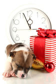 Beautiful little puppy surrounded by gift isolated on white — Stock Photo
