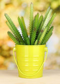 Cactus in pot on bright background — Stock Photo