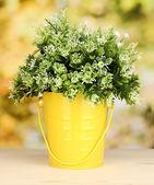 明るい背景上の鍋で装飾的な花 — ストック写真