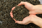 Man hands with grain, on sunflower seeds background — Stock Photo