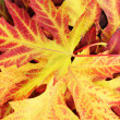 Beautiful background of bright autumn leaves — Stock Photo