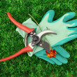 Secateurs with flower on green grass background — 图库照片