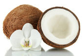 Coconuts with flower, isolated on white — Stock Photo