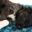 Royalty-Free Stock Photo: Cute puppy sleeping on rug close up
