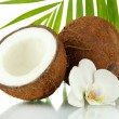 Постер, плакат: Coconuts with leaves and flower isolated on white