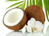 Noix de coco avec feuilles et fleurs, isolé sur blanc — Photo