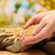 Man hands with grain, on green background - Foto Stock