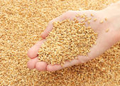 Man hand with grain, on wheat background — Stock Photo