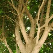 Upper branches of tree close-up - Stock Photo