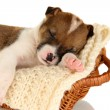 Beautiful little puppy sleeping in basket isolated on white — Stock Photo #18996923