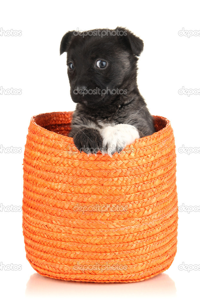 Cute puppy in basket isolated on white — Stock Photo #18996935