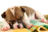 Beautiful little puppy sleeping isolated on white — Stock Photo