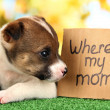 Abandoned little puppy seeking home on green grass on natural backgraund — Stock Photo #19159713