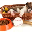 Beautiful little puppy sleeping in basket isolated on white — Stock Photo #19164325