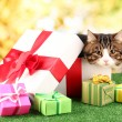 Cat in gift box on grass on bright background - Stockfoto