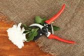 Tesouras de podar com flor em pano de saco em fundo de madeira — Fotografia Stock