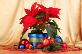 Beautiful poinsettia with christmas balls on gold fabric background — Photo