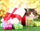 Gato en caja de regalo en pasto sobre fondo brillante — Foto de Stock