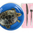 Stock Photo: Red ear turtle on plate isolated on white