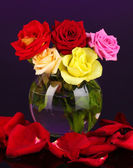 Beautiful roses in glass vase on purple background — Stock Photo